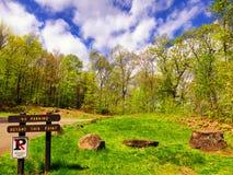 Árvores de encontro ao céu azul Imagens de Stock