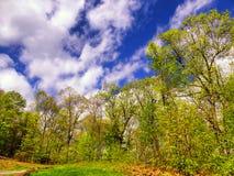 Árvores de encontro ao céu azul foto de stock royalty free
