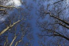 Árvores de encontro ao céu Tiro acima da perspectiva fotografia de stock