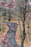 Árvores de escalada Foto de Stock Royalty Free