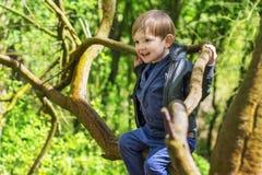 Árvores de escalada do rapaz pequeno Foto de Stock Royalty Free