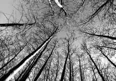 Árvores de esqueleto Foto de Stock Royalty Free