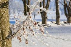 Árvores de faia Imagem de Stock Royalty Free