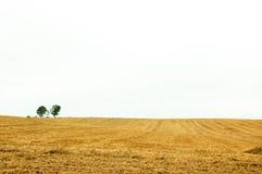 Árvores de família Imagens de Stock