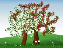 Árvores de florescência Foto de Stock
