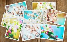Árvores de florescência da mola collage imagem de stock