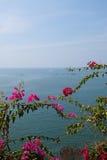 Árvores de florescência e o oceano fotografia de stock royalty free