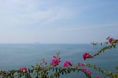 Árvores de florescência e o oceano imagens de stock