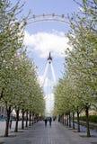 Árvores de florescência e os wheelmen grandes Fotografia de Stock