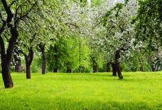 Árvores de florescência no prado verde fotos de stock royalty free