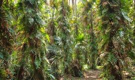 Árvores de floresta Fotografia de Stock