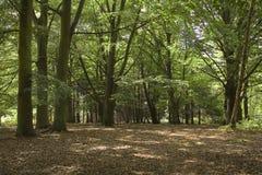 Árvores de floresta Fotos de Stock Royalty Free