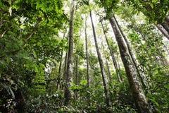 Árvores de floresta Foto de Stock