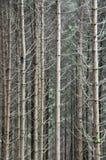 Árvores de floresta Imagem de Stock Royalty Free