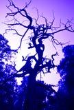 Árvores de floresta imagem de stock