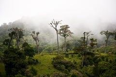 Árvores de floresta altas da nuvem imagens de stock