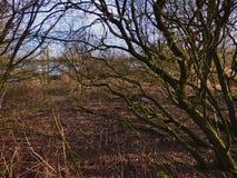 Árvores de floresta arborizadas backlit pela luz solar dourada fotografia de stock