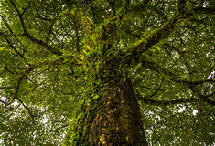 Árvores de floresta com musgo e samambaias Imagem de Stock Royalty Free