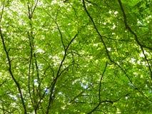 Árvores de floresta como o fundo da natureza imagens de stock