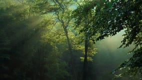 Árvores de floresta da manhã com levantar feixes do sol video estoque
