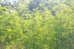 Árvores de floresta da mola Foto de Stock