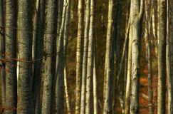 Árvores de floresta densas imagens de stock