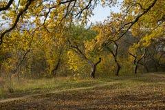 Árvores de floresta do outono Fotos de Stock