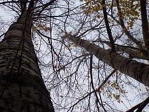 Árvores de floresta do outono nebulosas fotografia de stock