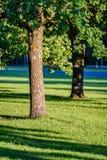 Árvores de floresta do verão Fundos de madeira verdes da luz solar da natureza Fotos de Stock Royalty Free