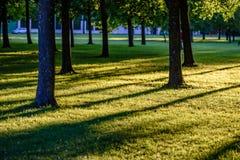 Árvores de floresta do verão Fundos de madeira verdes da luz solar da natureza Foto de Stock