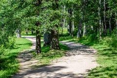 Árvores de floresta do verão Fundos de madeira verdes da luz solar da natureza Imagens de Stock Royalty Free