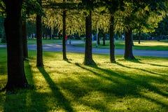 Árvores de floresta do verão Fundos de madeira verdes da luz solar da natureza Fotografia de Stock Royalty Free
