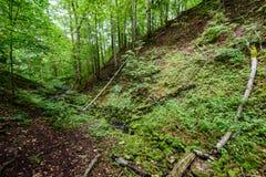 Árvores de floresta do verão Fundos de madeira verdes da luz solar da natureza Imagens de Stock