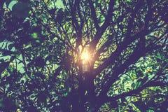 Árvores de floresta Fundos de madeira verdes da luz solar da natureza Imagem de Stock Royalty Free