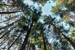 Árvores de floresta Fundos de madeira verdes da luz solar da natureza Imagens de Stock Royalty Free