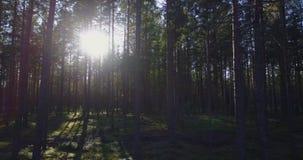 Árvores de floresta madeiras da árvore de floresta da calha do voo video estoque