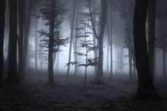 Árvores de floresta na luz contrária durante uma névoa Imagens de Stock