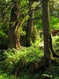 Árvores de floresta na luz solar imagens de stock royalty free