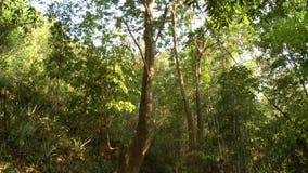 Árvores de floresta nativas reservadas, Bagan, Myanmar filme