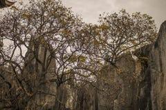 Árvores de floresta de pedra fotografia de stock