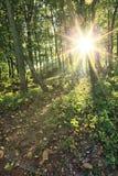 Árvores de floresta verdes Imagem de Stock