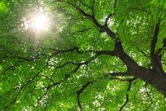 Árvores de floresta verdes Foto de Stock
