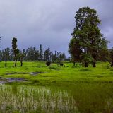 Árvores de floresta verdes bonitas Foto de Stock