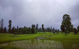 Árvores de floresta verdes bonitas Imagem de Stock