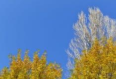 Árvores de folhas mortas Foto de Stock Royalty Free