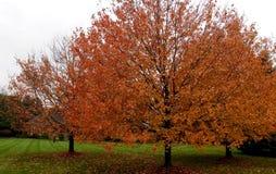 Árvores de folhas mortas na área residencial foto de stock royalty free