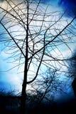Árvores de Forboding Imagens de Stock Royalty Free