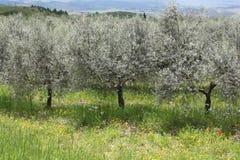 Árvores de fruto Fotografia de Stock