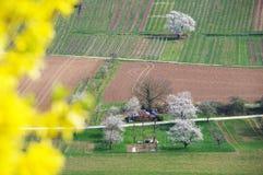Árvores de fruto de florescência brancas entre prados e campos Fotografia de Stock