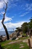 Árvores de Ghost no Califonia movimentação de 17 milhas Fotografia de Stock Royalty Free